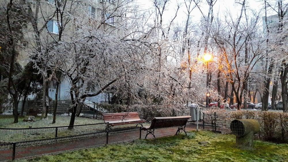 În Berceni mai mulți arbori au cedat astăzi sub greutatea gheții 1